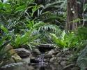 botanical-gardens-1000-x-768
